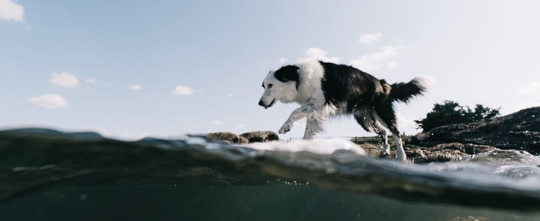 Dog on the water by captain yvon